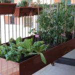 Il programma dei corsi sulla coltivazione organizzati dal consorzio Co.Al.A