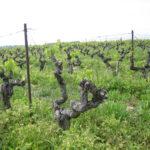 Nuovo decreto per la tutela della viticoltura eroica e storica