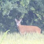 Danni da animali selvatici: la Regione assegna le risorse